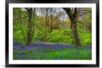 Wooley Wood Bluebells, Framed Mounted Print
