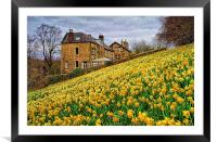 Field of Daffodils, Framed Mounted Print