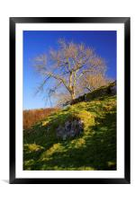 Lone Tree Above Cave Dale , Framed Mounted Print
