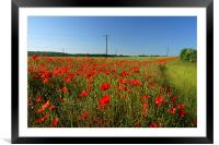 Poppies and Telegraph poles , Framed Mounted Print