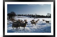 Winter gathering at Bamford, Framed Mounted Print