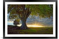 Sunset under the Beech                           , Framed Mounted Print