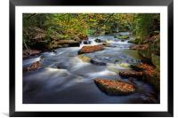 Rivelin Autumn Colours                            , Framed Mounted Print