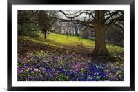 Springtime in Endcliffe Park                      , Framed Mounted Print