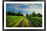 Chard Countryside                     , Framed Mounted Print