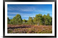 Surprise View Heather & Silver Birch              , Framed Mounted Print