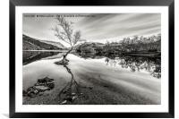 Llyn Padarn The Lone Tree, Framed Mounted Print