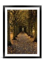Autumn Avenue, Framed Mounted Print