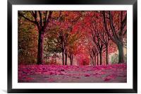 Autumn beauty.., Framed Mounted Print