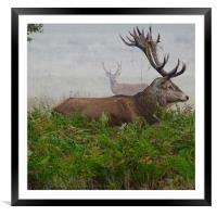 Stag in the Mist, Framed Mounted Print