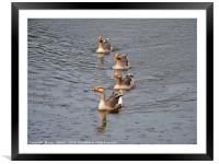 Swimming in the Rain                       , Framed Mounted Print
