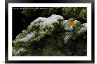 Robin in the winter, Framed Mounted Print