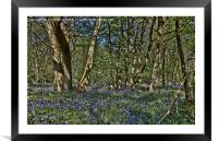 Bluebells in the woods, Framed Mounted Print
