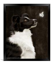 Border Collie with Butterfly, Framed Print