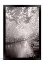 Sunshine Canopy, Framed Print