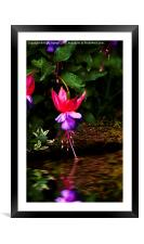 Dancing on Water , Framed Mounted Print