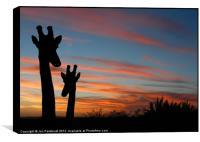 Giraffes and sunset, Box Print