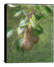 A Pair of Pears, Box Print