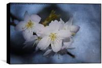 Springtime Blossom.