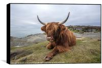 Highland Cow Chilling Out