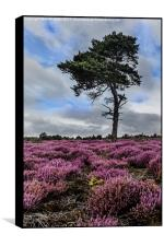 Alone In The Heather, Box Print