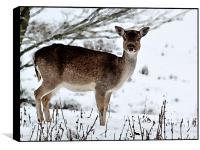 Deer in Wintertime, Box Print