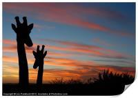 Giraffes and sunset, Print