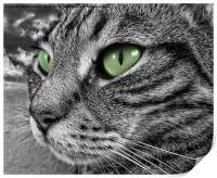 Poppys green eyes, Print