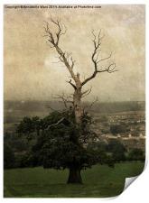 The Skeletal Tree, Print