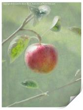 Apple of my Eye., Print