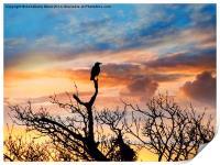 Corvus Sunset, Print