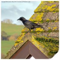 Crow on the Tiles, Print