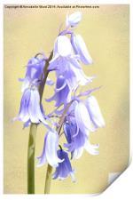 Bluebells on Cream, Print