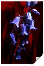 Bluebells on Red, Print