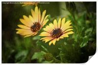 Spring Flower Smile., Print