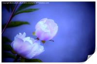 Soft Pink Flowers., Print