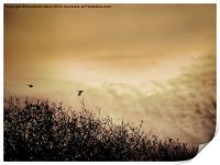 Fly By Dawn, Print