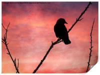 Jackdaw Sunset., Print