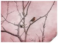 Chaffinch and Pink Sky., Print