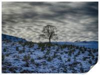 Winter sky, lone tree on a hill, Print