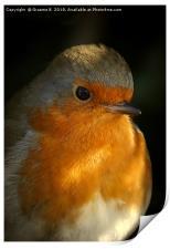 Portrait Of A Robin, Print
