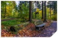Autumn Forest Walks, Print