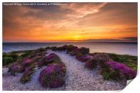 Sunset Path, Print