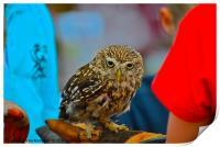 Owl - Strigiformes, Print