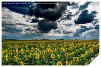 yellow field, Print