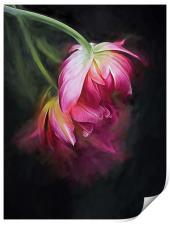 Fusion Flowers, Print