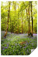 Bluebells and Trees, Print