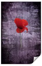 Single Poppy, Print