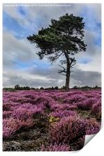Alone In The Heather, Print