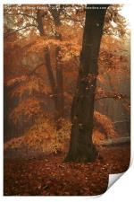 Misty Woods, Print